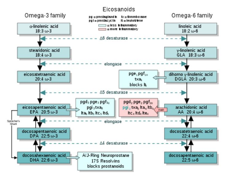 Essential Fatty Acids 101  New evidence suggests that the long-chain omega-3 fat DHA is essential.  Fish oil better than flax.