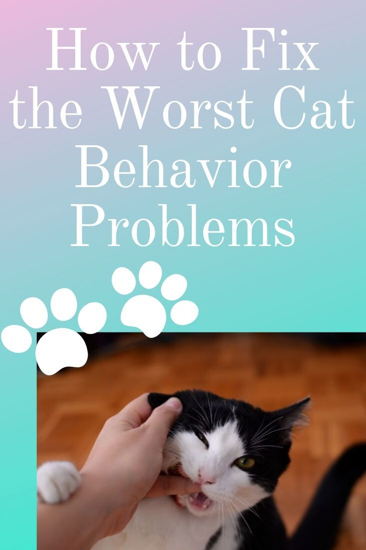 How To Fix The Worst Cat Behavior Problems In 2020 Cat Behavior Problems Bad Cats Cat Behavior