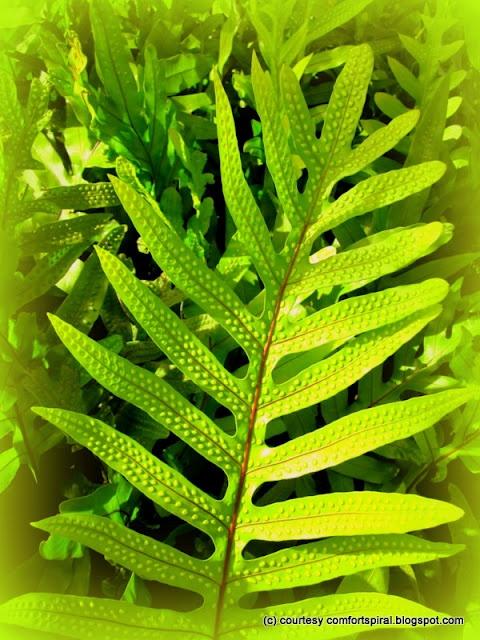 34 Best Subtropical Fruits Images On Pinterest Tropical
