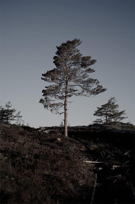 Tree Portraits