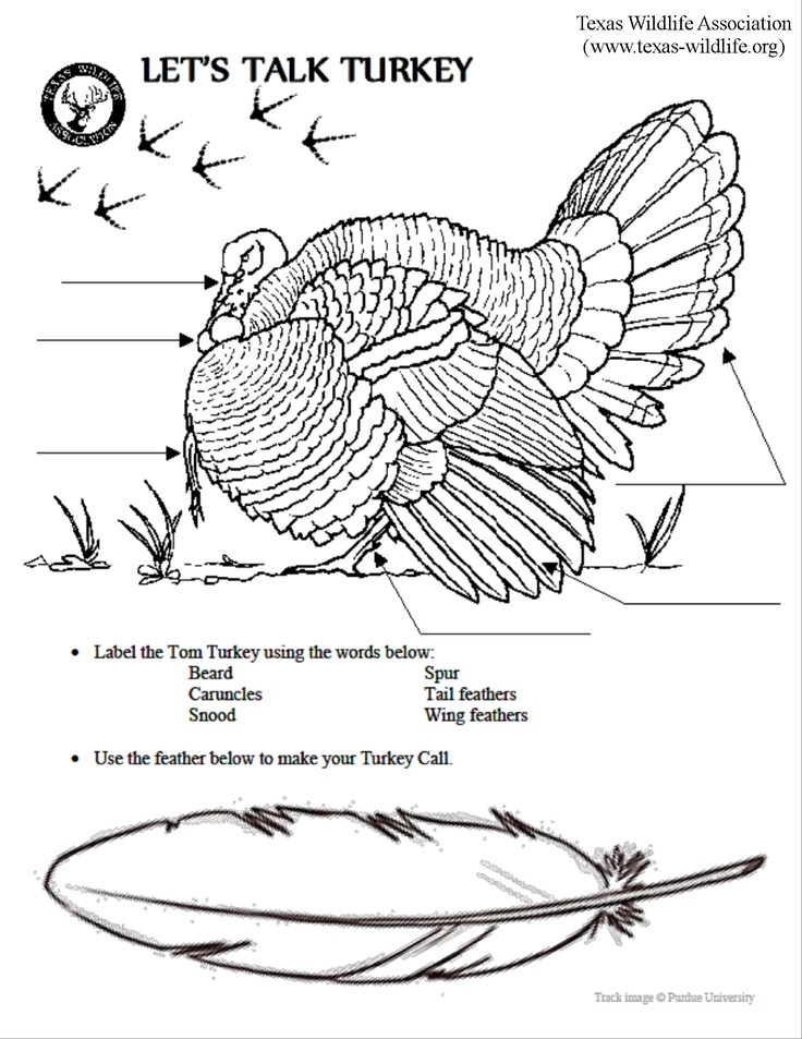Anatomy of a turkey