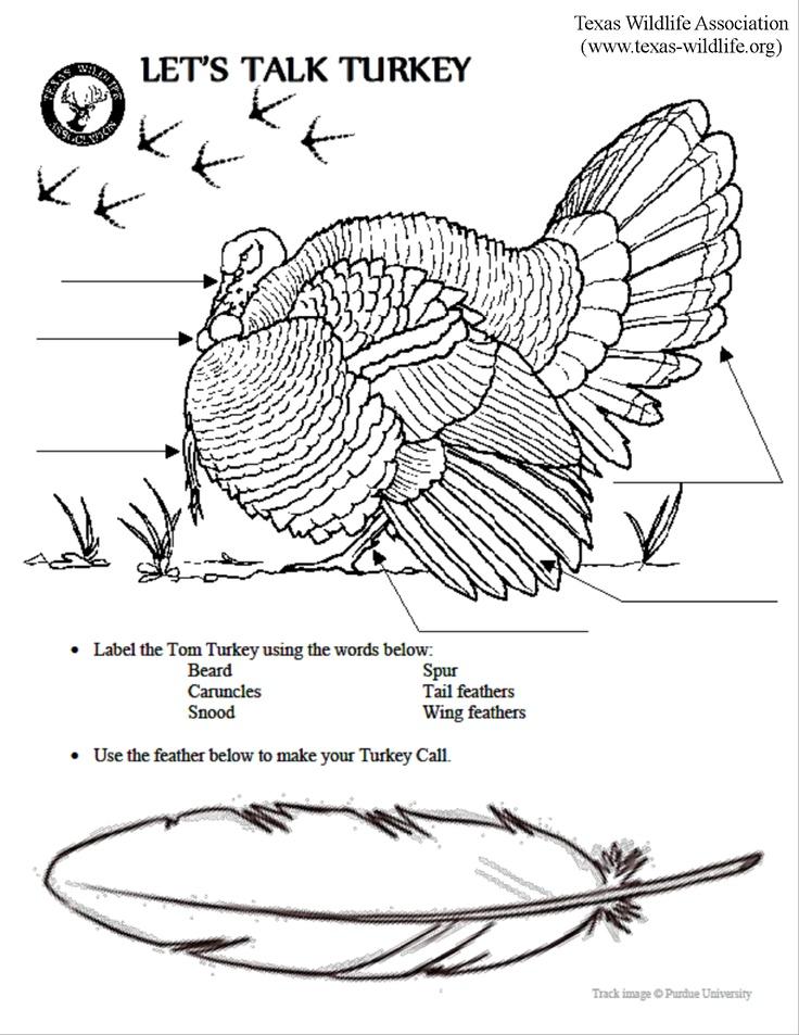 Turkey head anatomy 1821544 - follow4more.info
