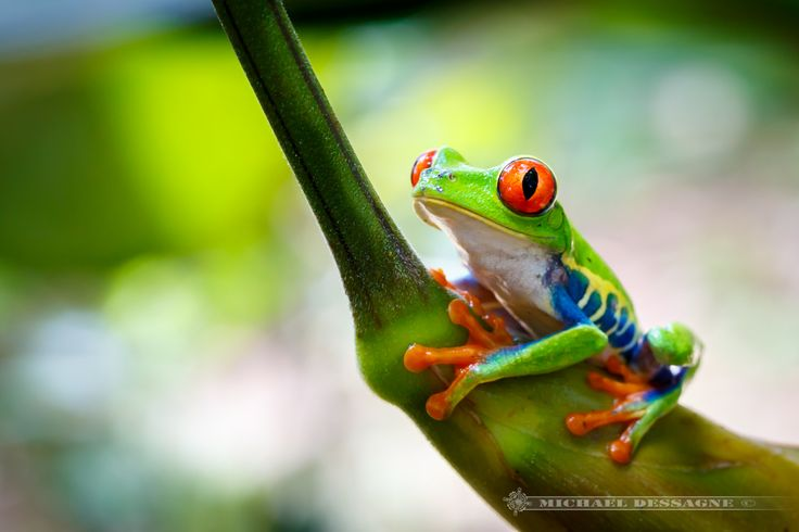 Spot photo : Frog's heaven au Costa Rica