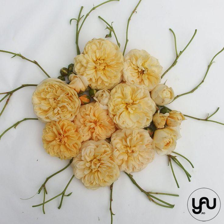 TRANDAFIRI DE GRADINA _ geometria trandafirilor _ yau concept_yau flori_elena toader (5)