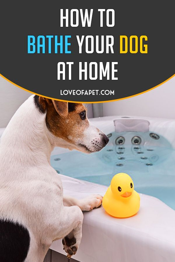 How To Bathe Your Dog At Home Beginner S Guide Dog Health Tips