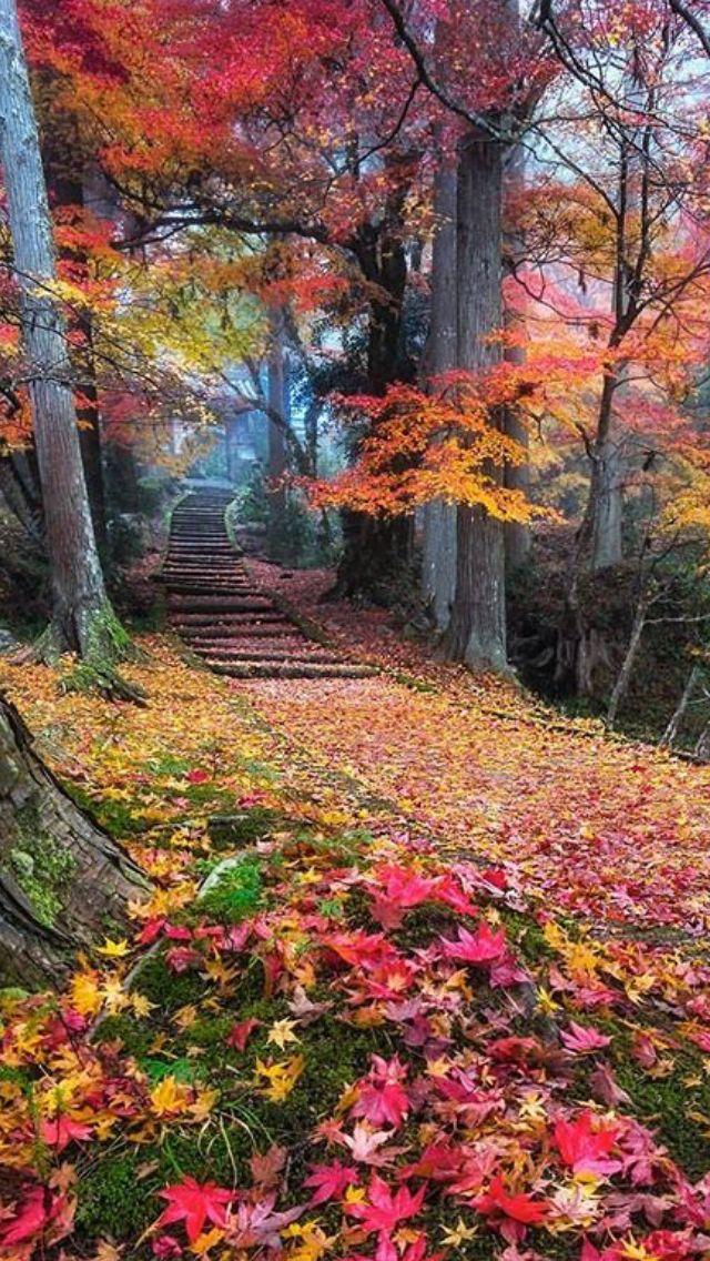 Beautiful Colors Beautiful Nature Autumn Scenery Nature Photography