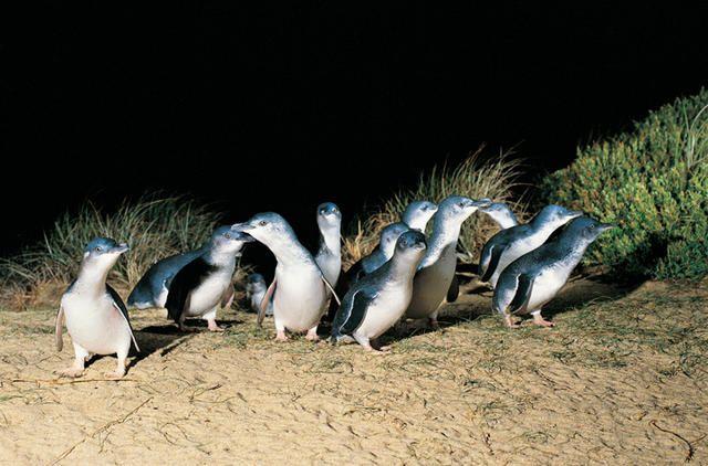 Pingu island - Australia