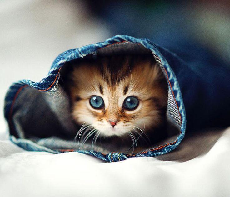 PHOTOS: Photog is master of cute-kitten pics - NY Daily News