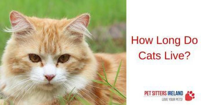 how long do cats live - 693×362