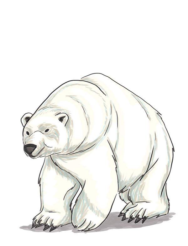 Animal Illustrations by Gabrielle Cosco, via Behance