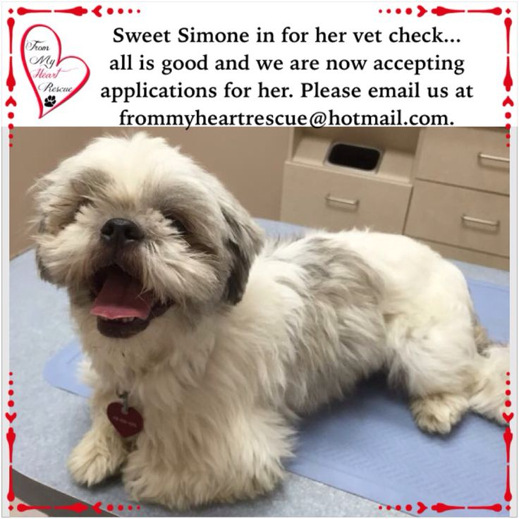 #Please ❤️+ #PIN #FromMyHeartRescue #ReacueWithoutBorders #SavingOneDogAtaTime ~ #Simone's #FMHR #Vet #Appointment #Update  *Thank you for your support.  *Info, Foster, Adoption, e-transfer & PayPal: frommyheartrescue@hotmail.com *Our Vets: Brock St. Animal Hospital 905-430-2644 *Fundraising & Volunteering: FMHRfundraising@hotmail.com  *www.frommyheartrescue.com  **http://awos.petfinder.com/shelters/ON441.html *Find us on; Facebook, Twitter, Instagram, Youtube & Google+
