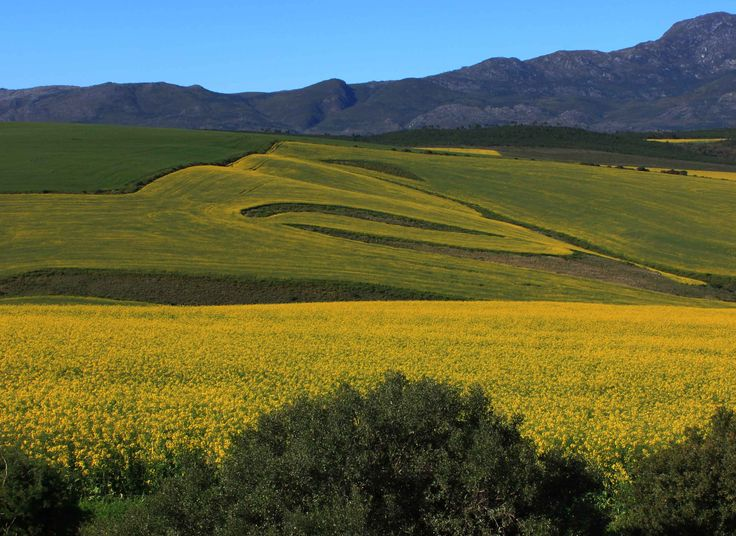 Road to Caledon and Greyton. 25 Aug 2014. by Mike Ohlson de Fine