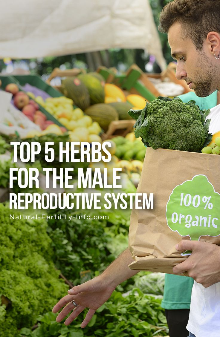 Sperm count increase fertility herbs consider