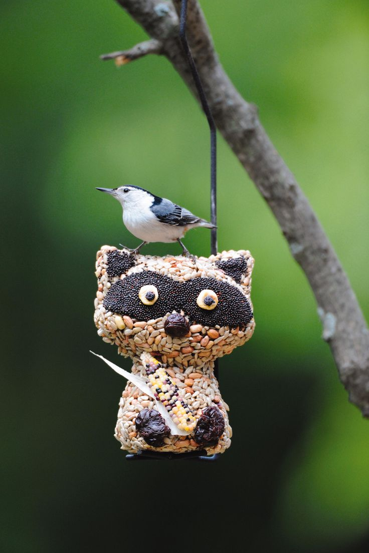 7 best cute way to feed birds images on pinterest wild birds