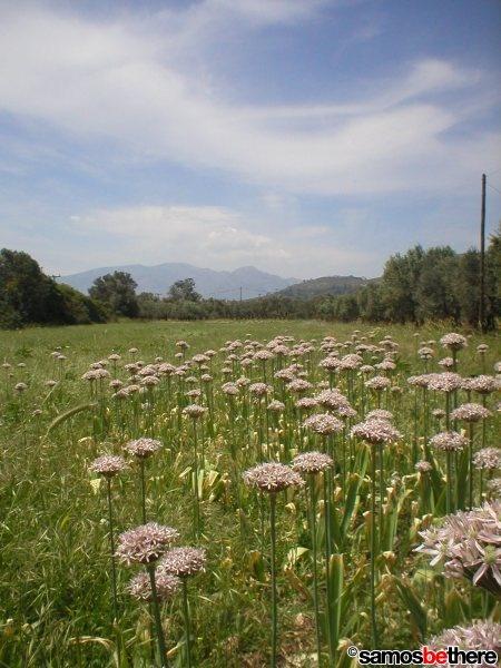 Samos 'Green' Island