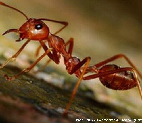 Best Natural Ant Killer For Outdoors