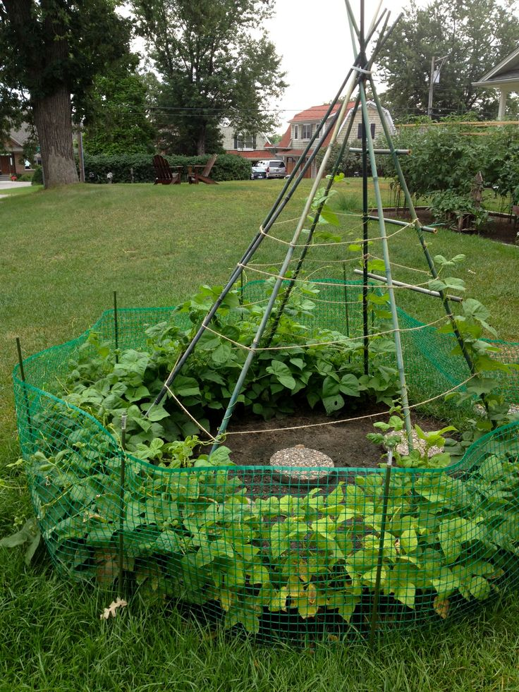 68 best Straw Bale Gardening images on Pinterest | Strawbale ...