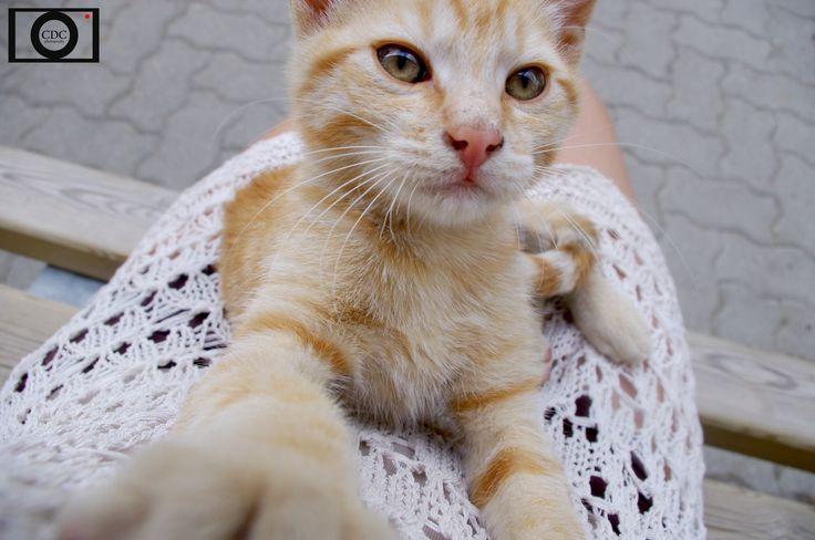 Micio cat love