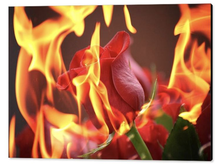 Quite out of the blue, this image popped into my mind. A beautiful red rosebud, immersed in flames but not being burnt or consumed. There is something a little mystical about it if you ask me. I do like the result. True beauty is untouchable.  What do you think?