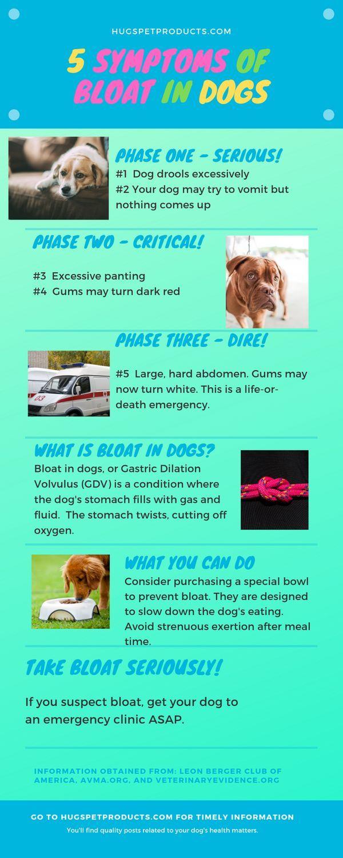 5 Symptoms Of Bloat In Dogs Bloating Symptoms Dog Health Tips