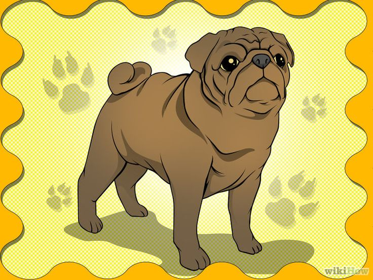 Pin By Mary Locke On I Can Draw Pugs Dogs Pug Art