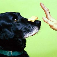 Training Dog Obedience Using Hand Signals
