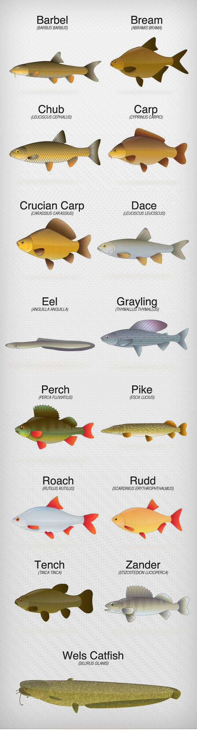 Fishing illustrations