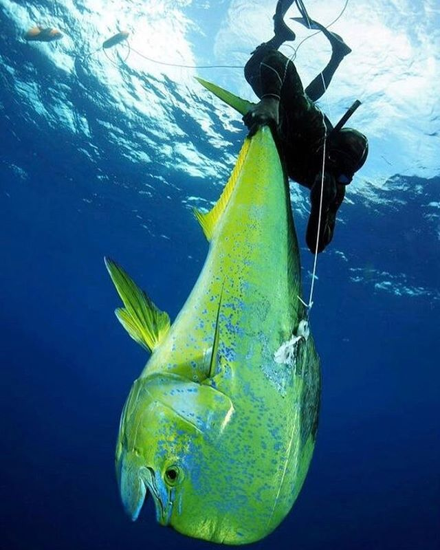 19 best Spearfishing images on Pinterest   Pesca submarina, Snorkel ...