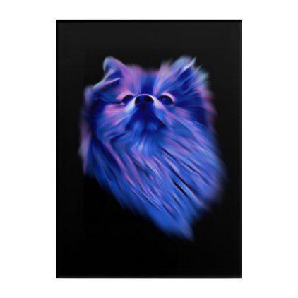 Blue Pomeranian Acrylic Print - animal gift ideas animals and pets diy customize