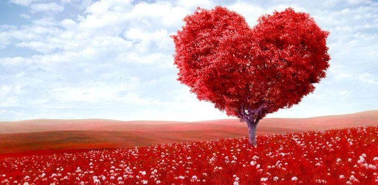 paisajes de amor eterno imagenes hermosas fotos enamorados arbol fondos wallpaper