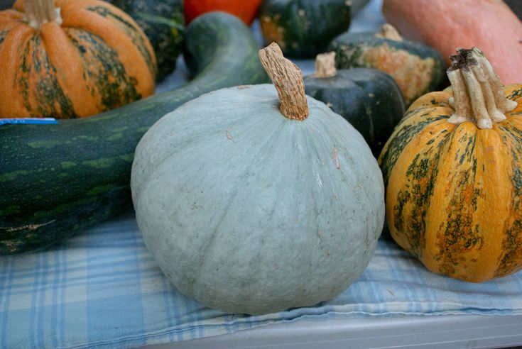 15 Vibrant Varieties of Winter Squash and Pumpkin