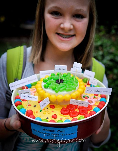 Incredible Edible Cell - This would make a great take-home project for students!