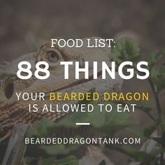 bearded dragon food list