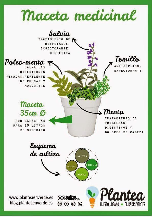 Una maceta aromática y medicinal. | Plantas