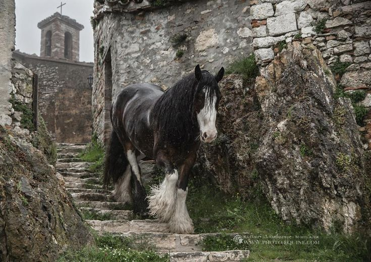 Horse on the rocky path by what looks like a castle. Reminds me of Ireland. (91) Equine Photography by Katarzyna Okrzesik-Mikołajek - Photos