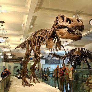 USA / NEW YORK CITY Musée américain d'Histoire naturelle : Compris avec votre billet : Rose Center for Earth and Space et 45 salles d'expositions permanentes présentant des dioramas mondialement célèbres, une baleine bleue de 28 mètres de long et la salle des dinosaures. Ne manquez pas les projections au cinéma IMAX LeFrak, avec des films spectaculaires en Digital 3D et 2D, ou l'incroyable Hayden Planetarium Space Show Dark Universe.
