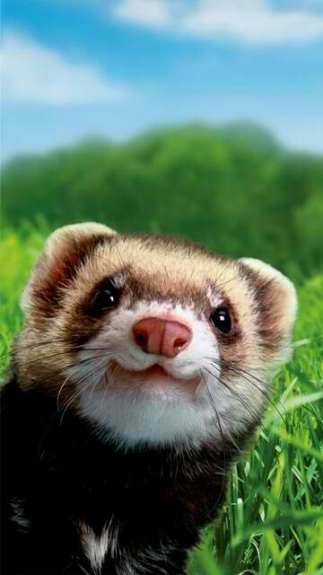 IM SPEECHLESS. LIKE O M G. THIS IS THE ESSENCES OF WHAT FERRETS ARE ABOUT. THE MIND THE BEAUTY THE MATTER. THIS IS ART
