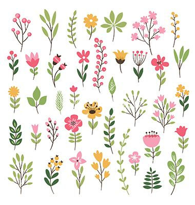 Colorful floral collection with leaves and flowers vector 4383224 - by Lenlis on VectorStock®