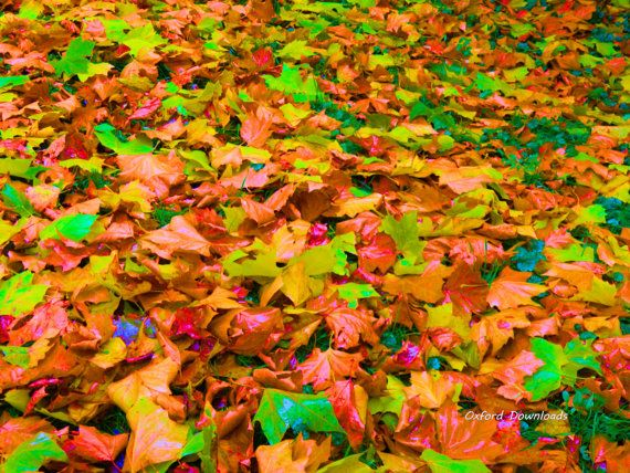 Autumn Leaves Autumn Printable Photography by OxfordDownloads