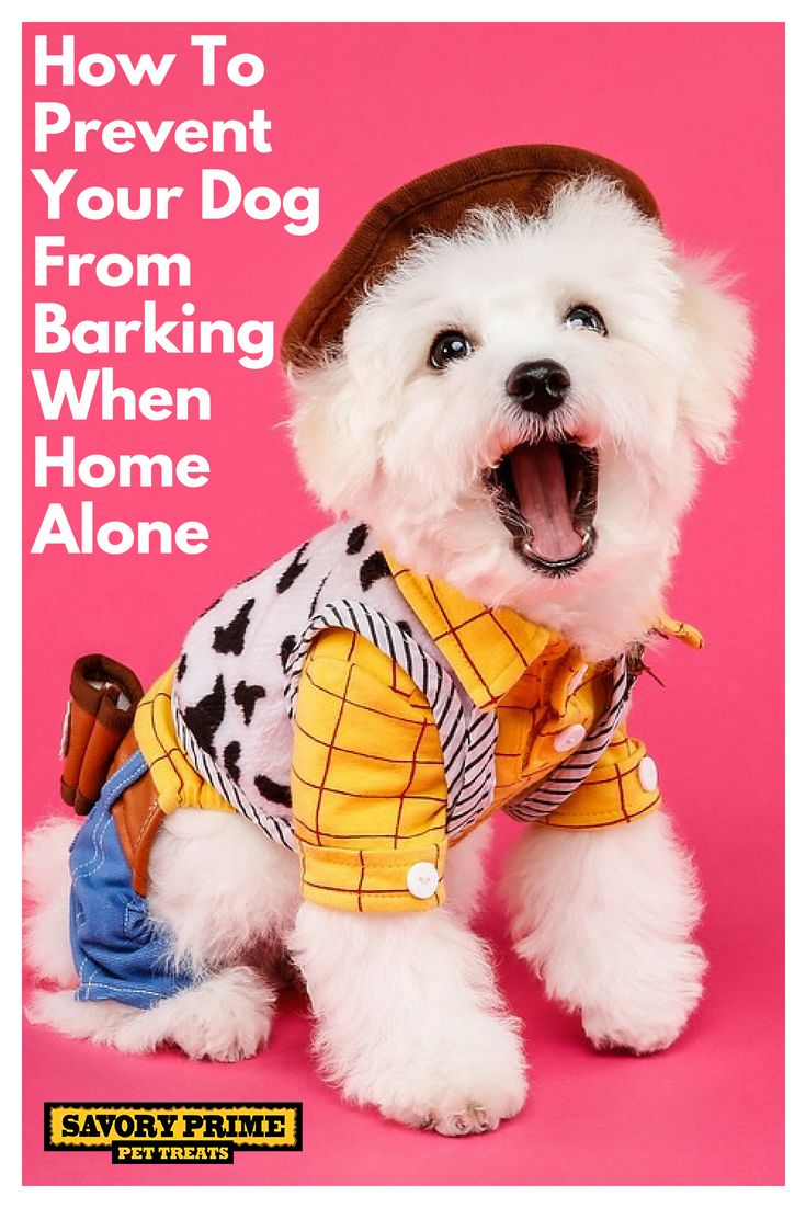How To Prevent Your Dog From Barking When Home Alone Child