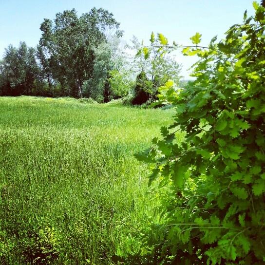 Green tag Tuscany