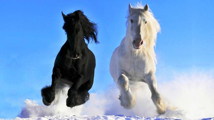 Mustang Horses Rearing Hledat Googlem Horses