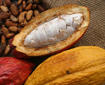 Avoid cacao in the post drug diet