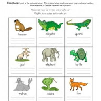 the 25 best classifying animals ideas on pinterest animal classification animal. Black Bedroom Furniture Sets. Home Design Ideas
