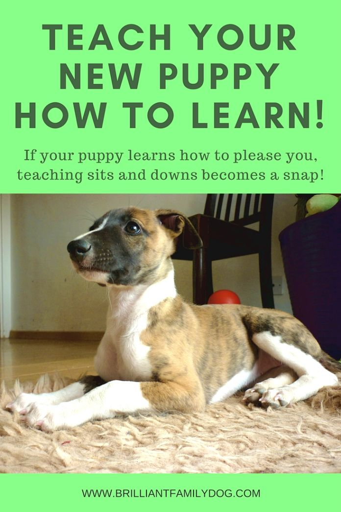 Dog Training Ideas Congratulations On Your New Dog Ownerexactly