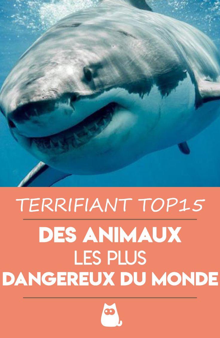 Quel Est L'animal Le Plus Dangereux Au Monde : l'animal, dangereux, monde, Animaux, Dangereux, Monde, PHOTOS, Dangereux,, Animaux,