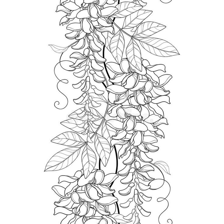 Vector Seamless Pattern With Outline Wisteria Or Wistaria