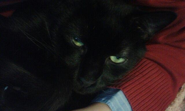 Luv my cat :*