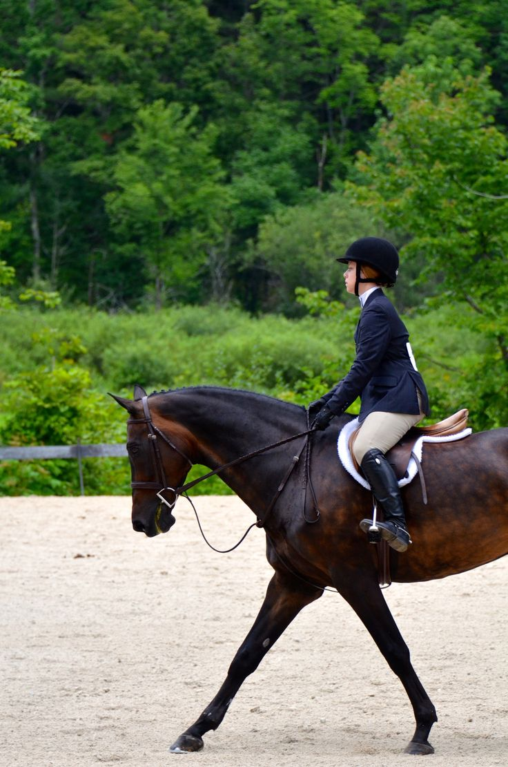 Pin by Stephanie Shelnutt on Equestrian Horses, Horse
