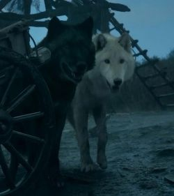 Shaggydog + Summer ♥  | Game of Thrones